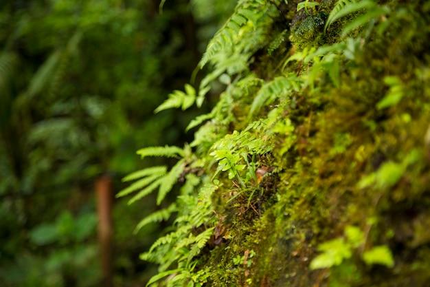 Close-up, de, musgo, crescendo, ligado, tronco árvore, em, floresta tropical Foto gratuita