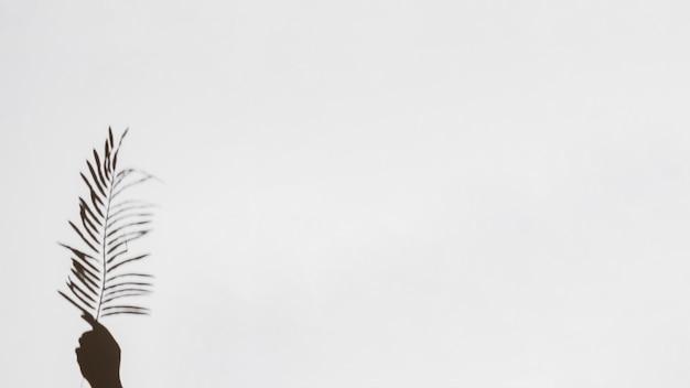 Close-up, de, passe segurar folha palma, branco, fundo Foto gratuita