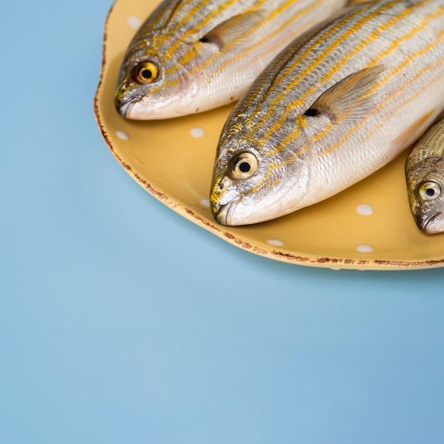 Close-up de peixes frescos em um lugar Foto gratuita