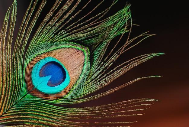 Close-up de penas de pavão Foto Premium