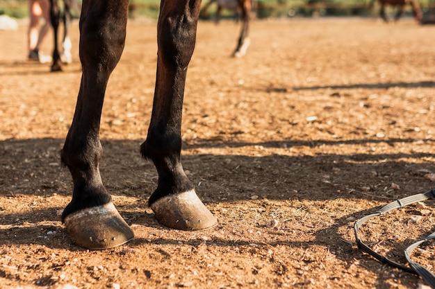 Close-up de pernas de cavalo Foto gratuita