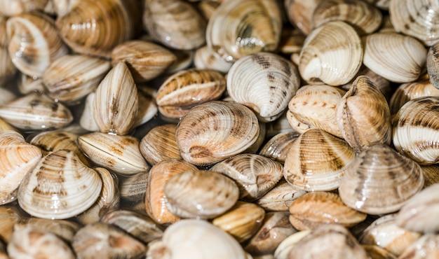 Close-up, de, pilha, de, fresco, moluscos Foto gratuita