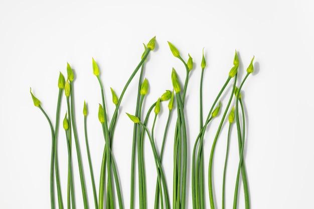 Close-up de plantas germinando Foto gratuita
