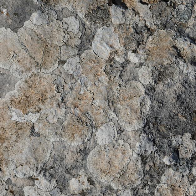Close-up, de, rocha, com, lichen Foto gratuita