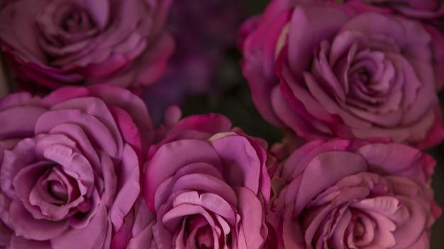 Close-up, de, roxo, fresco, rosa, flores, pano de fundo Foto gratuita