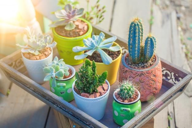 Close-up de suculentas em vasos paisagem Foto Premium