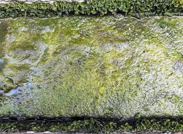 Close-up, de, sujo, verde, seaweed, visto, textura Foto Premium