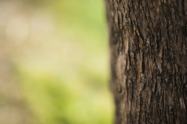 Close-up, de, tronco árvore, em, obscurecido, fundo Foto gratuita