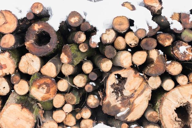 Close-up, de, troncos árvore, coberto neve Foto gratuita
