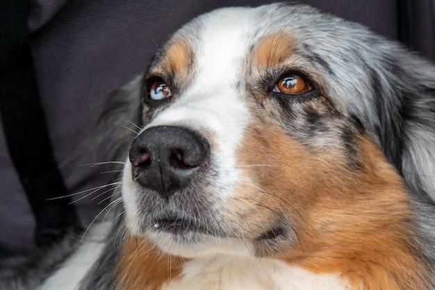 Cães com olhos lacrimejando: o que pode ser?