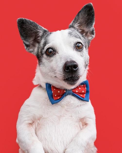 Close-up de um lindo cachorro com gravata borboleta Foto gratuita