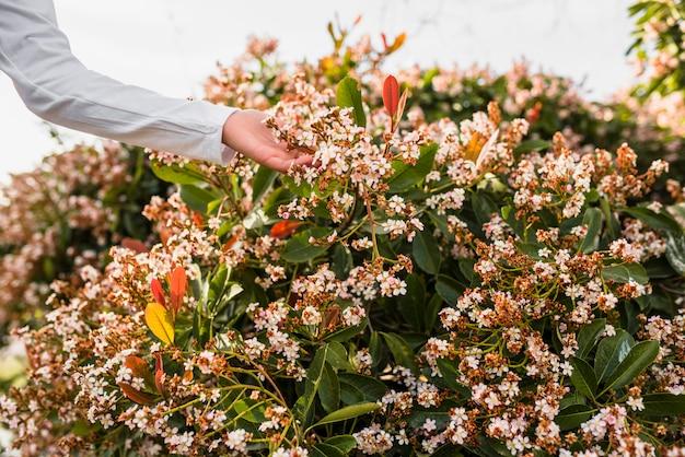 Close-up, de, um, meninas, mão, tocar, bonito, flores brancas Foto gratuita