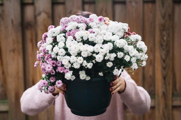 Close-up, de, um, mulher segura, planta potted, de, cor-de-rosa branco, aster, flores, frente, dela, rosto Foto gratuita