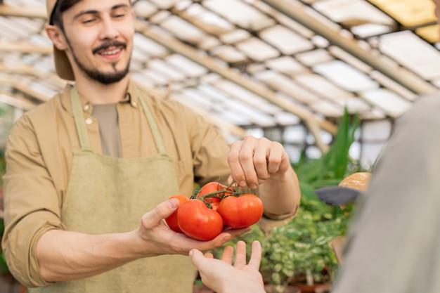 Close-up de um vendedor de fazenda jovem e positivo mostrando tomates maduros no galho para o cliente no mercado do fazendeiro Foto Premium