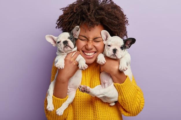Close-up de uma mulher satisfeita com cabelo afro segurando dois filhotes, passando o tempo de lazer com amigos animais leais, feliz por ter cachorros buldogues franceses Foto gratuita