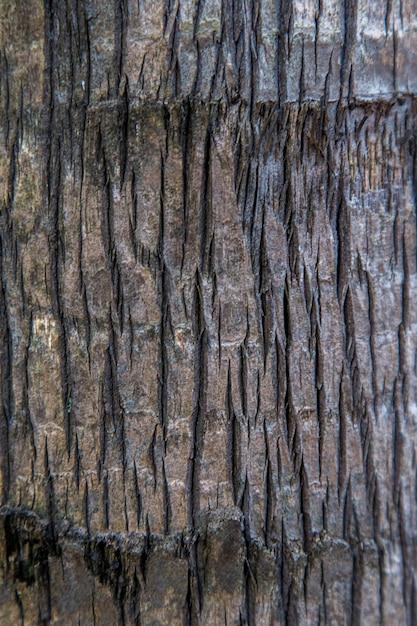 Close-up do log isolado do topo com textura de madeira. Foto Premium