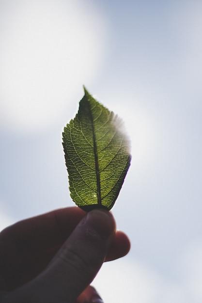 Close up dos dedos de uma pessoa segurando uma pequena folha verde contra o céu ao fundo Foto gratuita