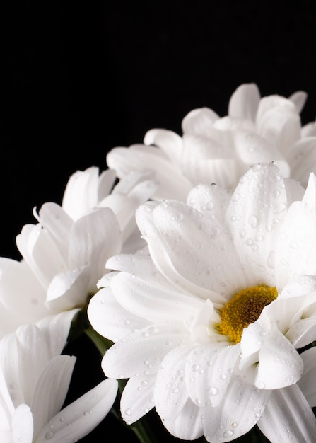 Close-up florescendo flores da primavera Foto gratuita