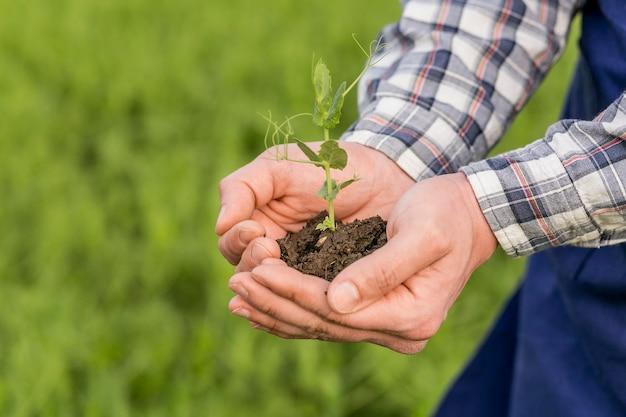 Close-up homem segurando a planta Foto Premium
