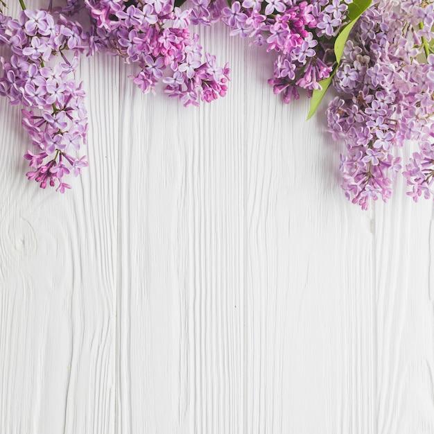 Close-up lilac em branco Foto gratuita