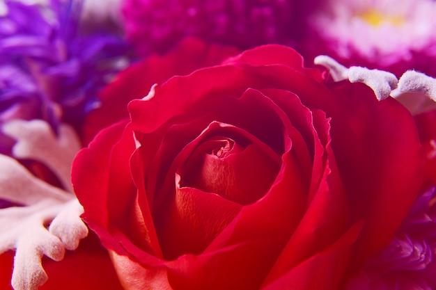 Close-up lindo botão de rosa vermelha Foto Premium