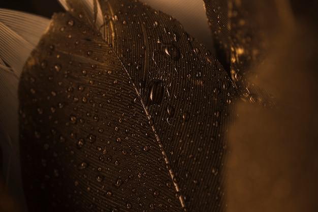 Close-up macro de uma pena marrom com gotas Foto gratuita