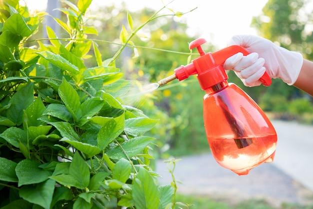 Close-up, mão da mulher usar luvas usando garrafa pulverização misturar bio fertilizante para vegetais verdes no farmimg. manutenção de vegetais não tóxicos para comer em família. Foto Premium