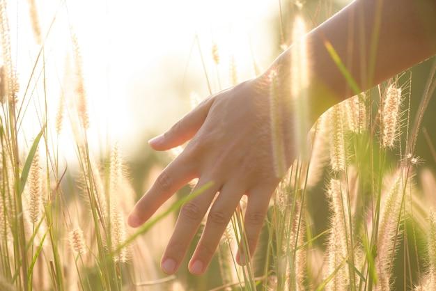 Close-up mão de mulher é tocar a grama de flor no campo com a luz do sol Foto Premium
