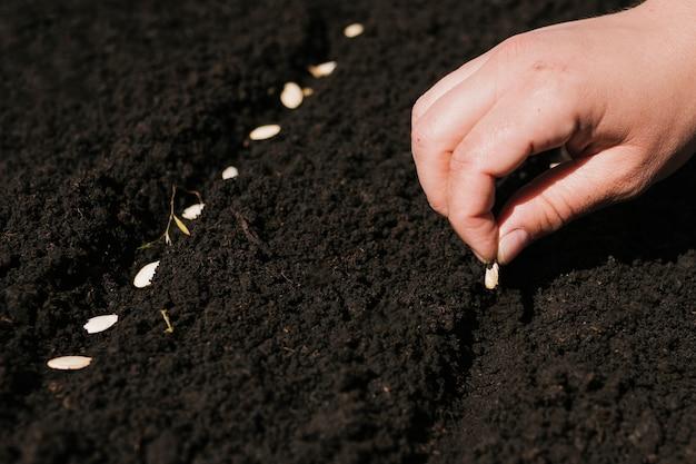 Close up mão plantando sementes Foto gratuita