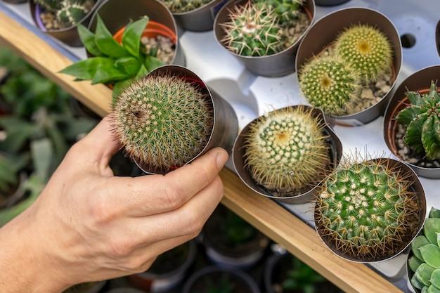 Close-up mão segurando a planta pequena cactus Foto gratuita