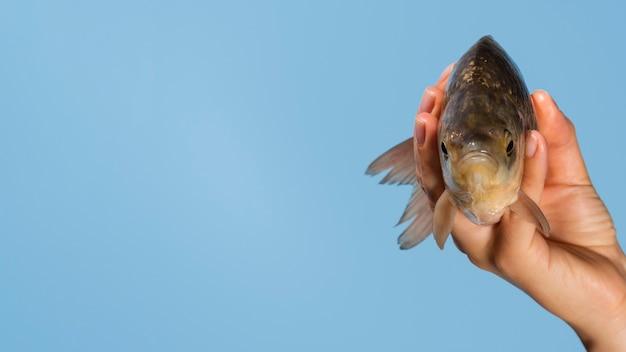 Close-up mão segurando peixe com espaço de cópia Foto gratuita