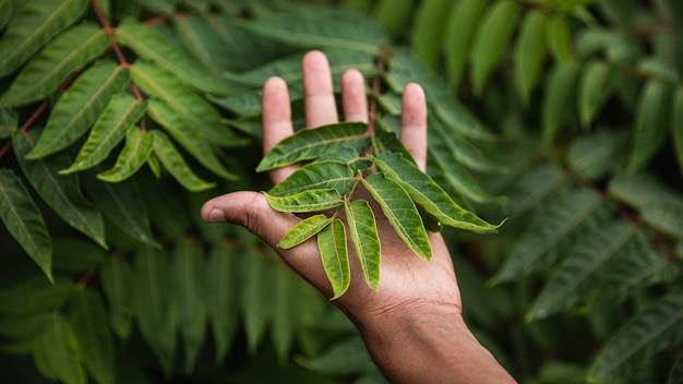Close-up mão segurando planta Foto Premium