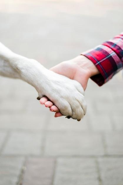 Close-up mulher segurando cães pata Foto gratuita