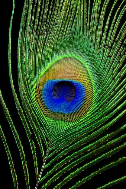 Close-up olho de pavão Foto Premium