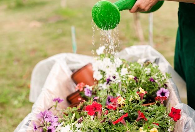 Close-up, pessoa, aguando, flores Foto gratuita