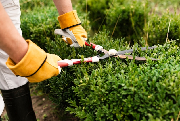 Close-up, pessoa, usando, aparando ferramenta, ligado, bush Foto gratuita