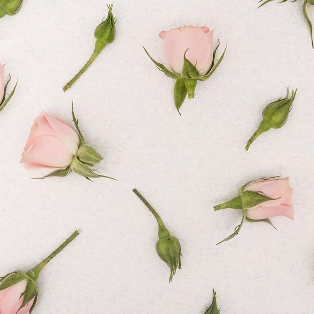 Close-up, primavera, rosa, flores, vista superior Foto gratuita