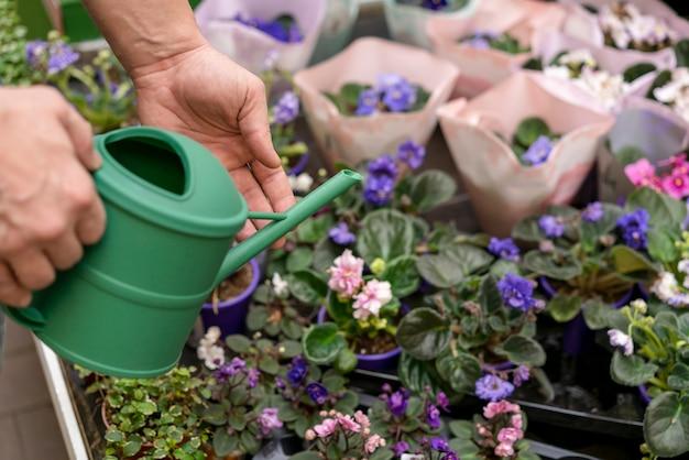 Close-up regando flores individuais Foto gratuita