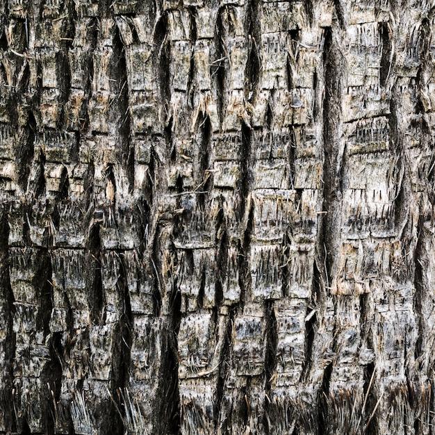 Close-up textura de madeira de uma árvore Foto gratuita