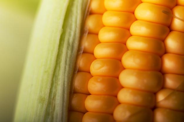 Close-up tiro milho doce maduro e descascado com gota de água Foto Premium