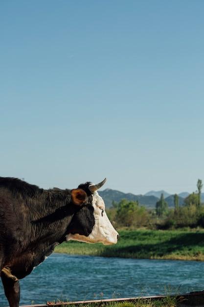 Close-up, vaca, por, a, lago Foto gratuita