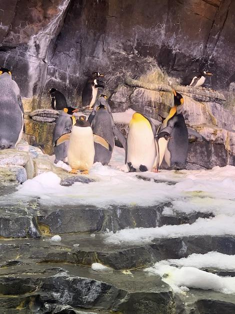 Close vertical de pinguins fofos sob as rochas do zoológico Foto gratuita