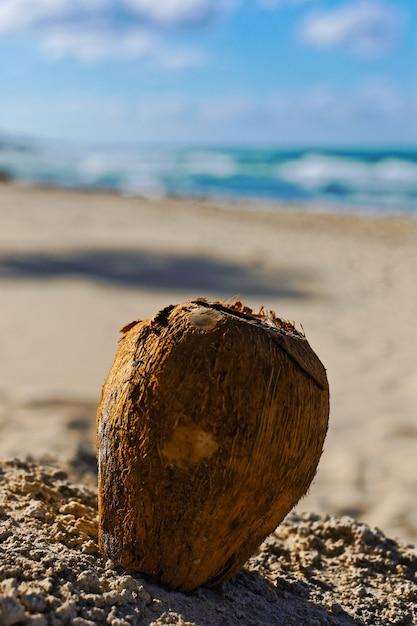 Close vertical de um coco na areia com um fundo desfocado Foto gratuita