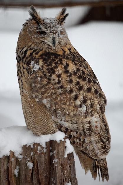 Close vertical de uma coruja-real em pé na floresta durante a nevasca Foto gratuita