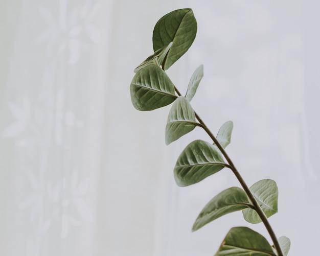 Closeup ampla seleção tiro de um ramo com folhas verdes Foto gratuita
