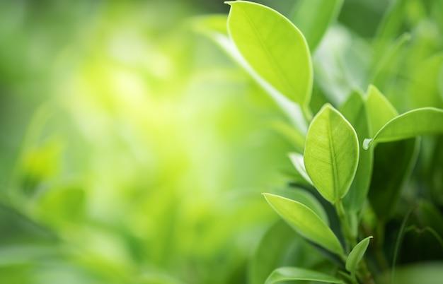 Closeup bela vista da folha verde natureza na vegetação turva fundo com luz solar Foto Premium