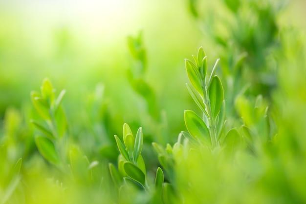Closeup bela vista da folha verde natureza na vegetação turva Foto Premium