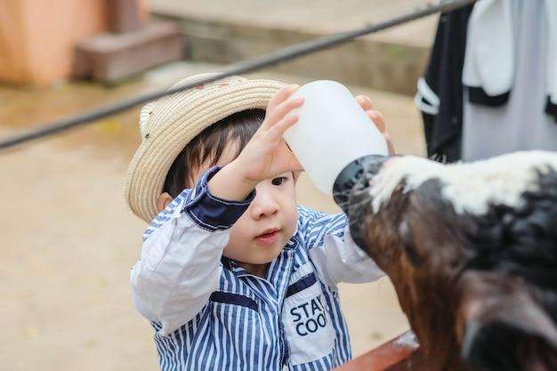 Closeup bonito criança asiática ordenhando bezerro por garrafa de leite no fundo da fazenda Foto Premium