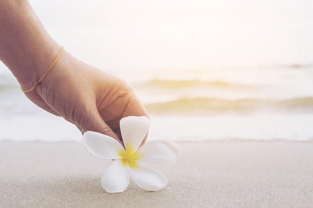 Closeup da senhora está mantendo plumeria flor na praia de areia Foto gratuita