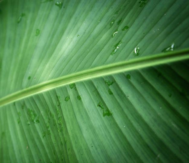Closeup de folha tropical molhada Foto gratuita